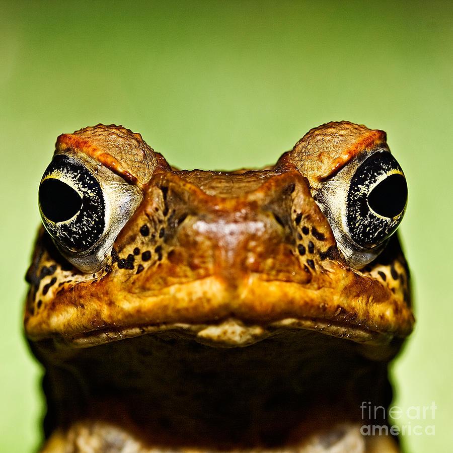 Amphibies Photograph - Unwanted Intruder by Joerg Lingnau
