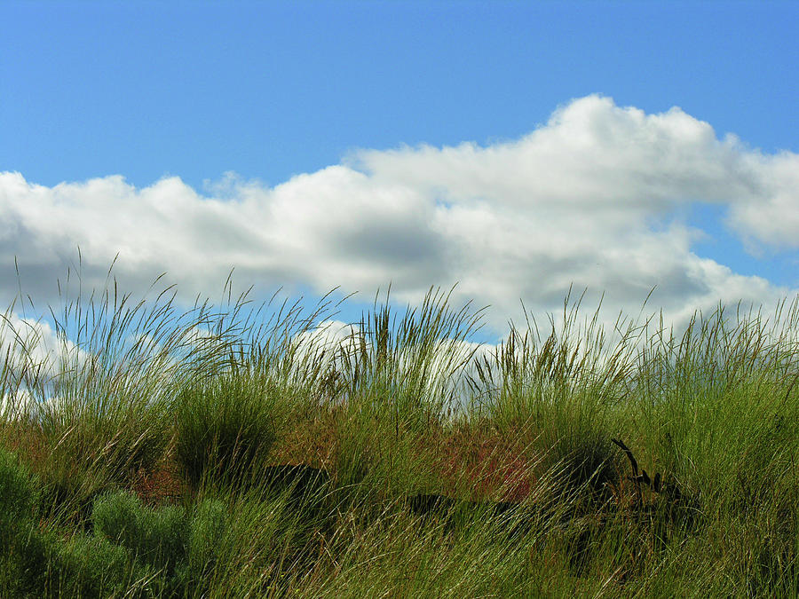 Grassy Hill Photograph - Up A Hill by Bonnie Bruno