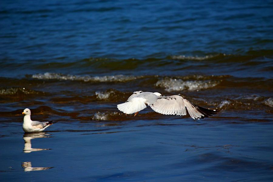 Bird Photograph - Up And Away by Amanda Struz