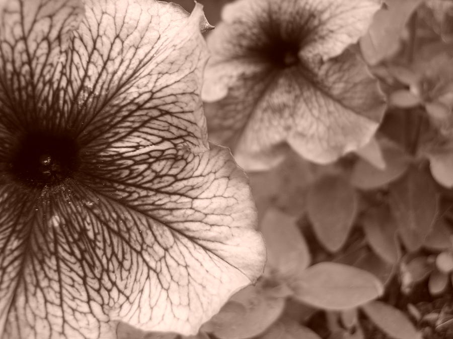 Flower Photograph - Up Close by Jennifer Compton
