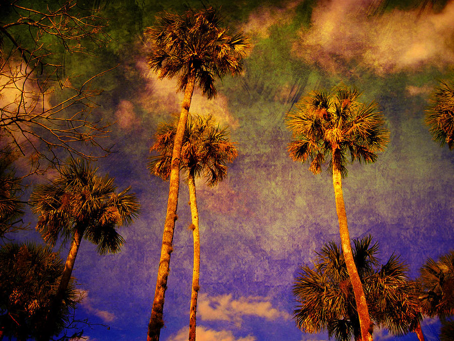 Palm Tree Photograph - Up Up To The Sky by Susanne Van Hulst