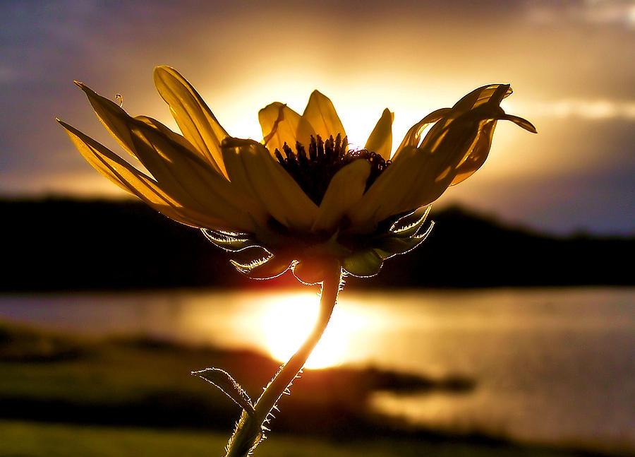 Flower Photograph - Uplifting by Karen Scovill