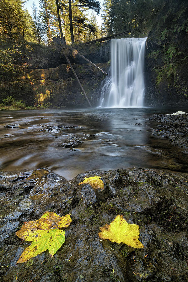 Silver Falls State Park Photograph - Upper North Falls In Autumn by David Gn