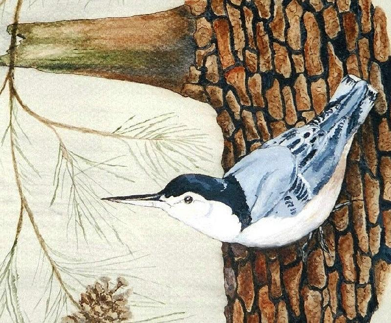 Nuthatch Painting - Upside Down by Debra Sandstrom