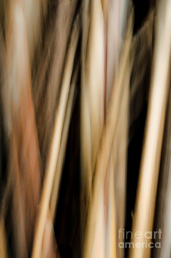 Abstract Photograph - Upwards by Emilio Lovisa