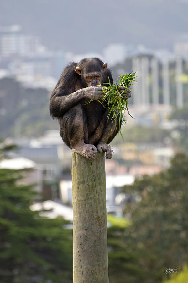 Zoo Photograph - Urban Jungle by Andrea Cadwallader