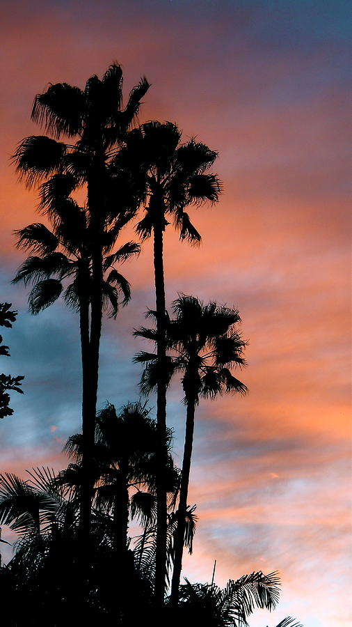 Palm Tree Photograph - Urban Palms by Peter Breaux