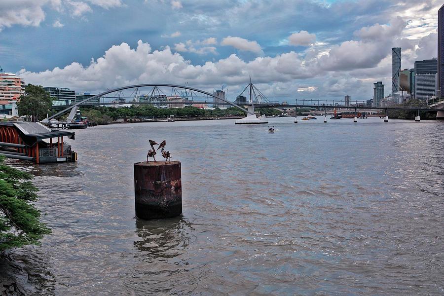Urban Photograph - Urban Pelicans by Chris Hood