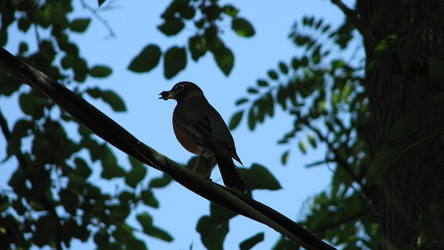 Bird Photograph - Urban Wild Bird by Shigeo Akiyama