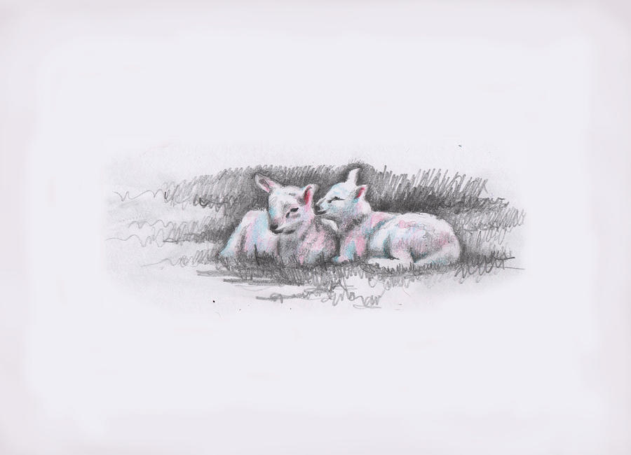Sheep Painting - Us two by Helen White