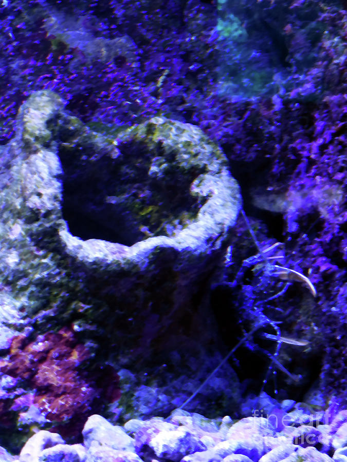 UW Coral Stone by Francesca Mackenney