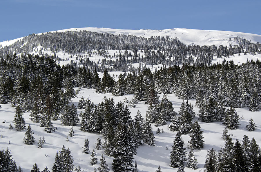 Vail Photograph - Vail Pass Colorado Winter by Brendan Reals
