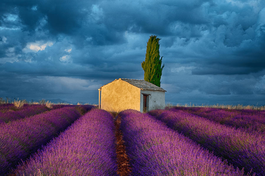 Shed Photograph - Valensole Shed by Matt Cohen