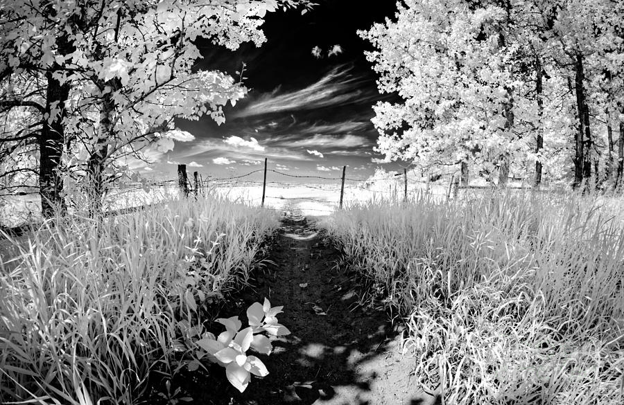 Infrared Photograph - Valley Of Light by Dan Jurak