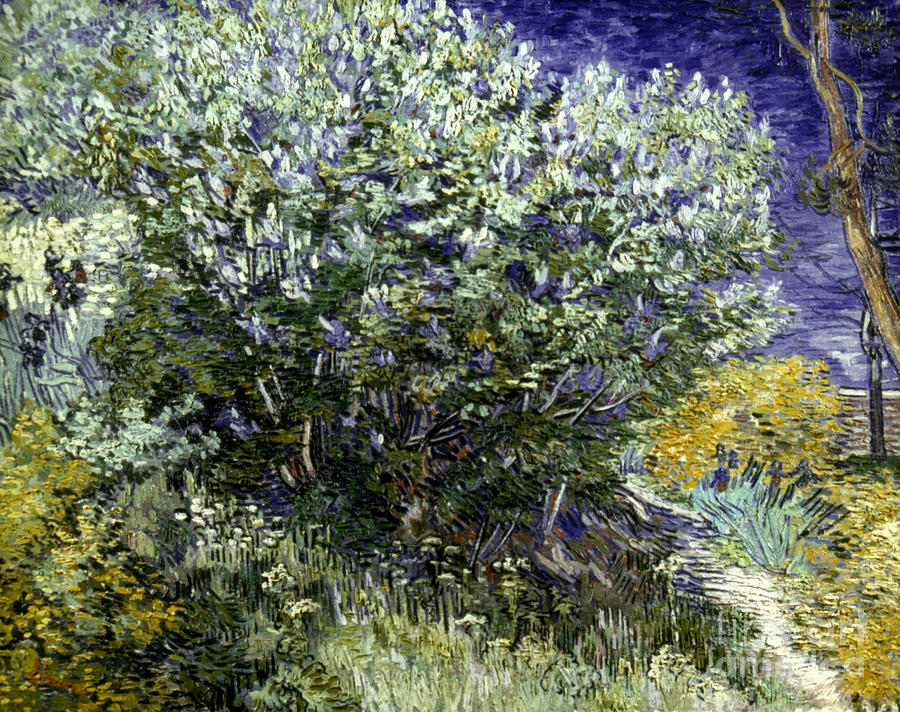19th Century Photograph - Van Gogh: Lilacs, 19th C by Granger