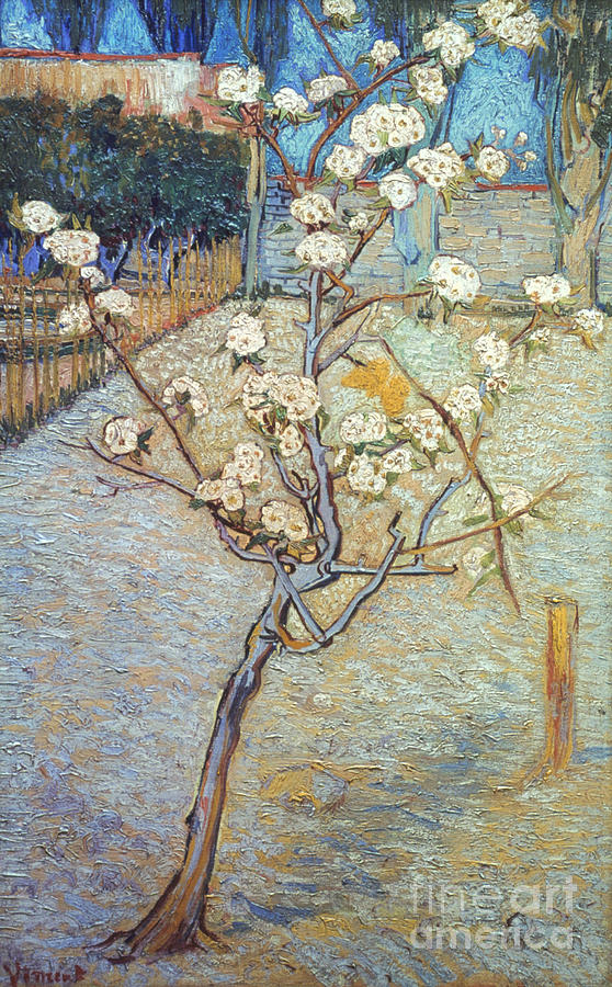 1888 Photograph - Van Gogh: Peartree, 1888 by Granger