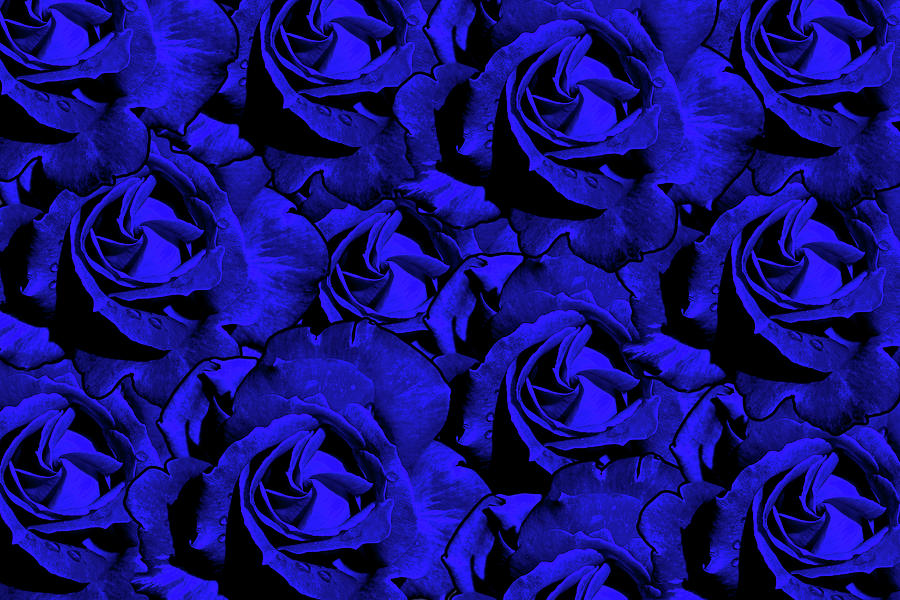 Blue Roses Photograph - Varas Rose 33 by Per Lidvall