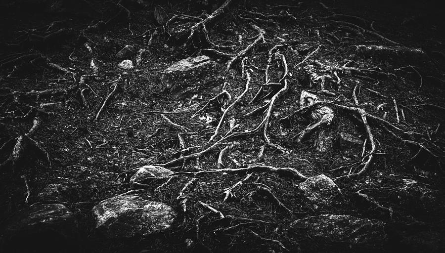 Matti Ollikainen Photograph - Vascular by Matti Ollikainen