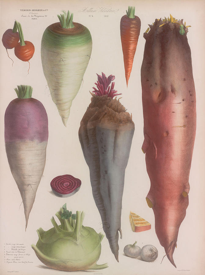 Vintage Art Print Poster Root Vegetables Wall Hangings Tapesty