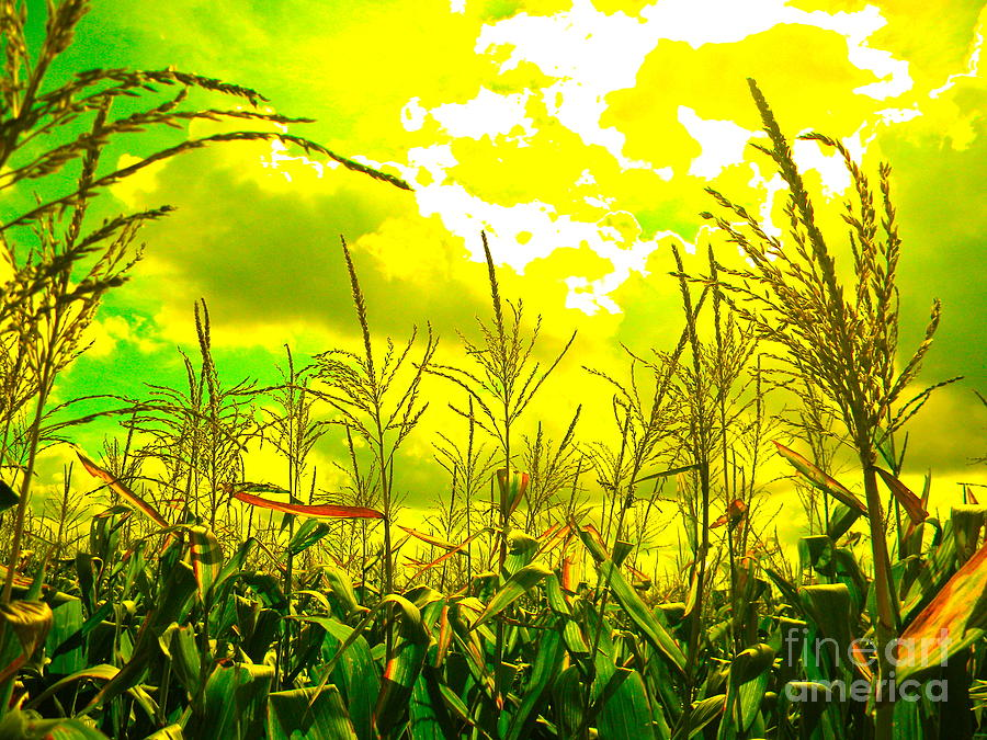 Corn Photograph - Vegetable Soul by Chuck Taylor