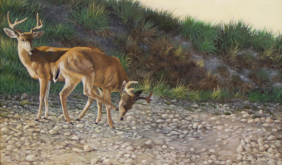 Deer Painting - Velvet Bucks by Shari Erickson