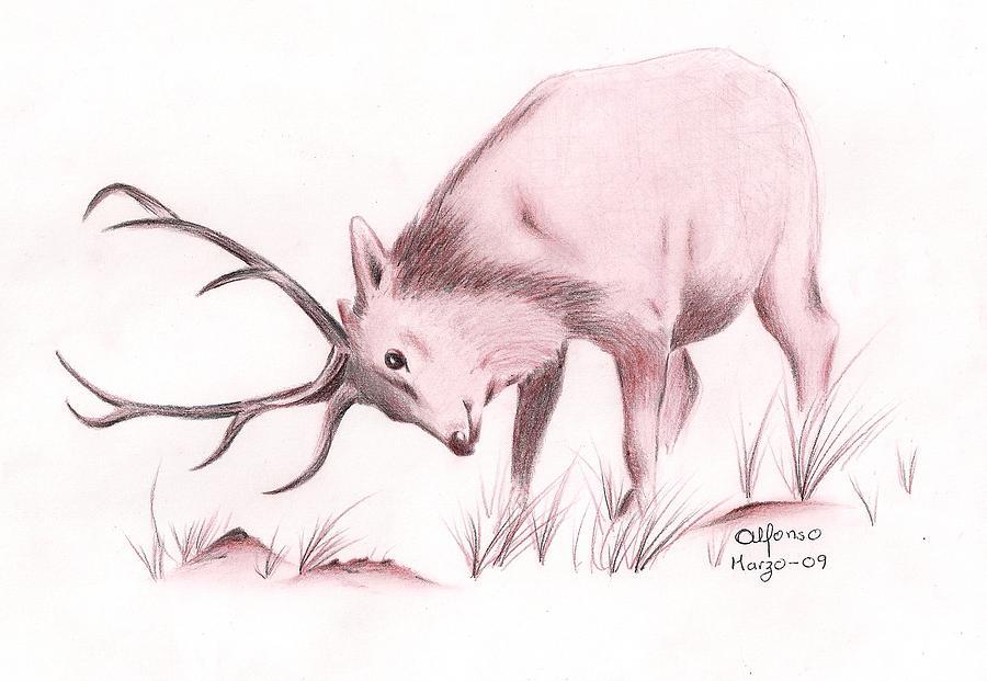 Wildlife Drawing - Venado by Alfonso Uitz Valdivia