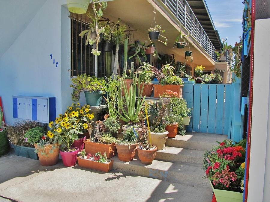 Plants Photograph   Venice Beach California Patio Flowers By Donna Wilson