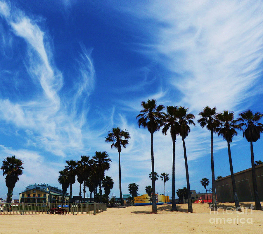 Venice Beach Photograph - Venice Beach by Daniele Smith