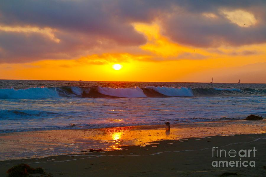 Venice Beach, California Sunset  by Michelle Stradford