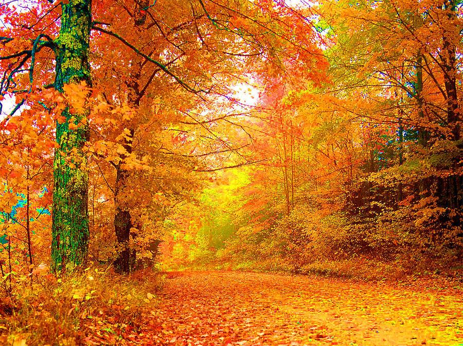 Landscape Photograph - Vermont Autumn by Vicky Brago-Mitchell