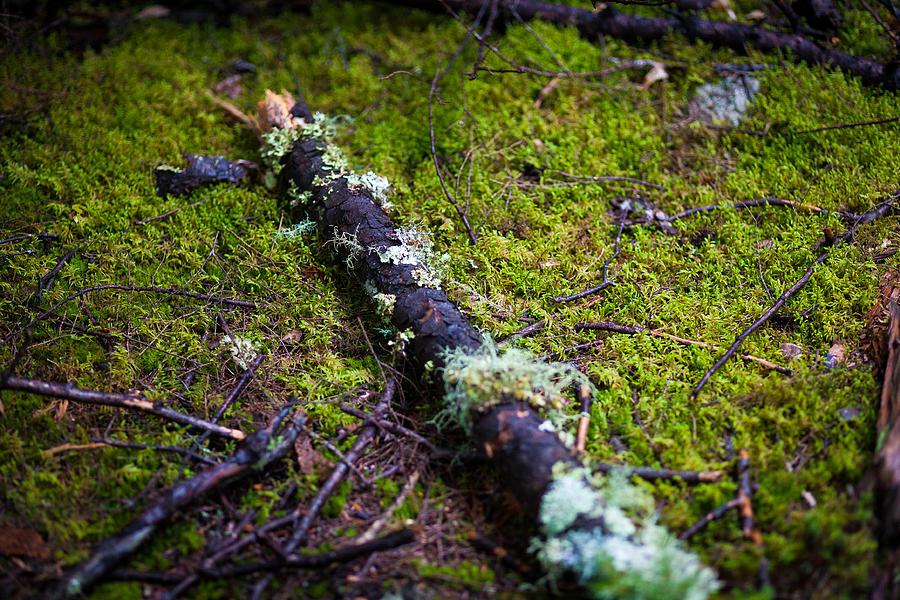 New England Photograph - Vermont Forest. by Robert Davis