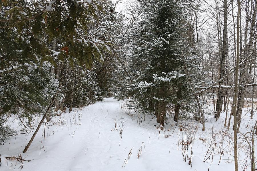 Vermont Winter Scenery 3 by Wayne Toutaint