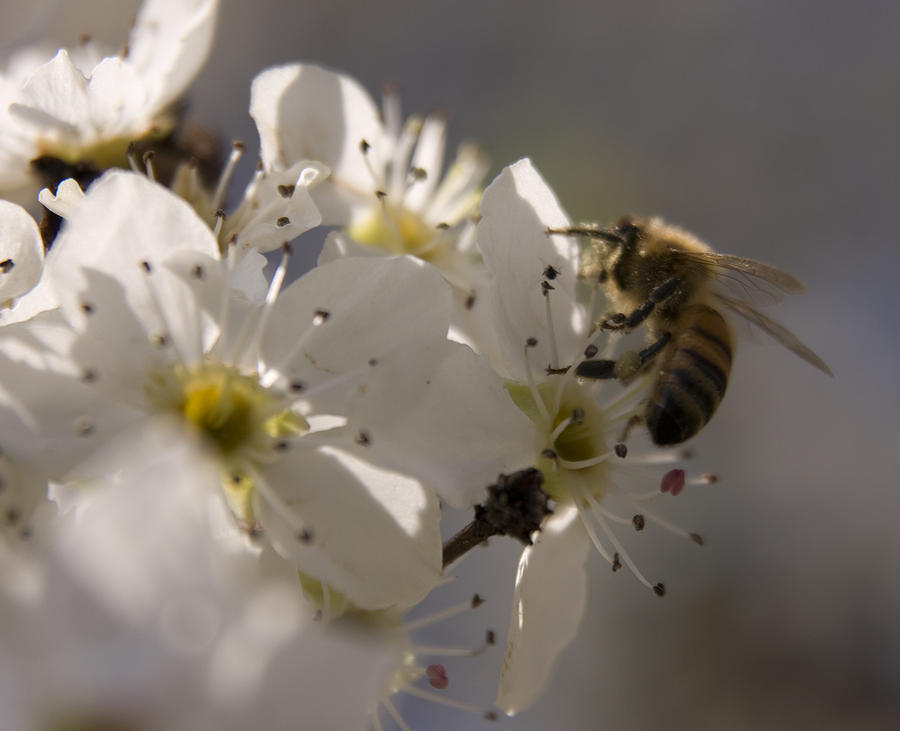Bee Photograph - Vernal Equinox I by Margaret Denny