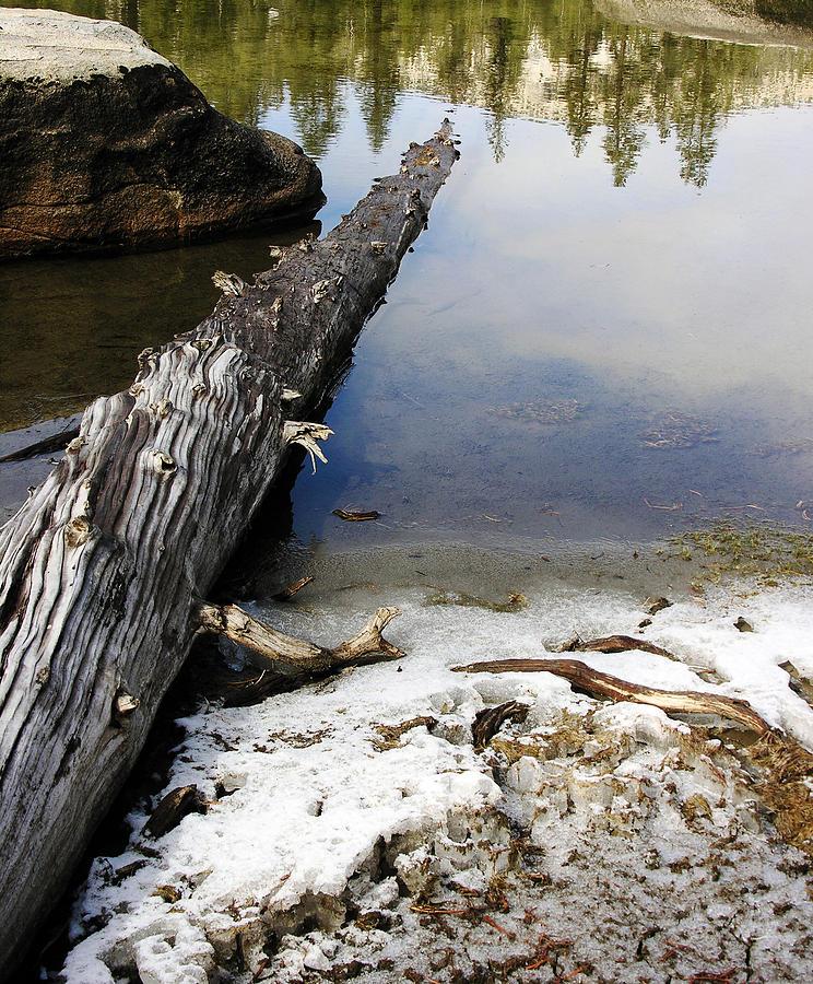Nature Photograph - Vernal Pond I by D Kadah Tanaka