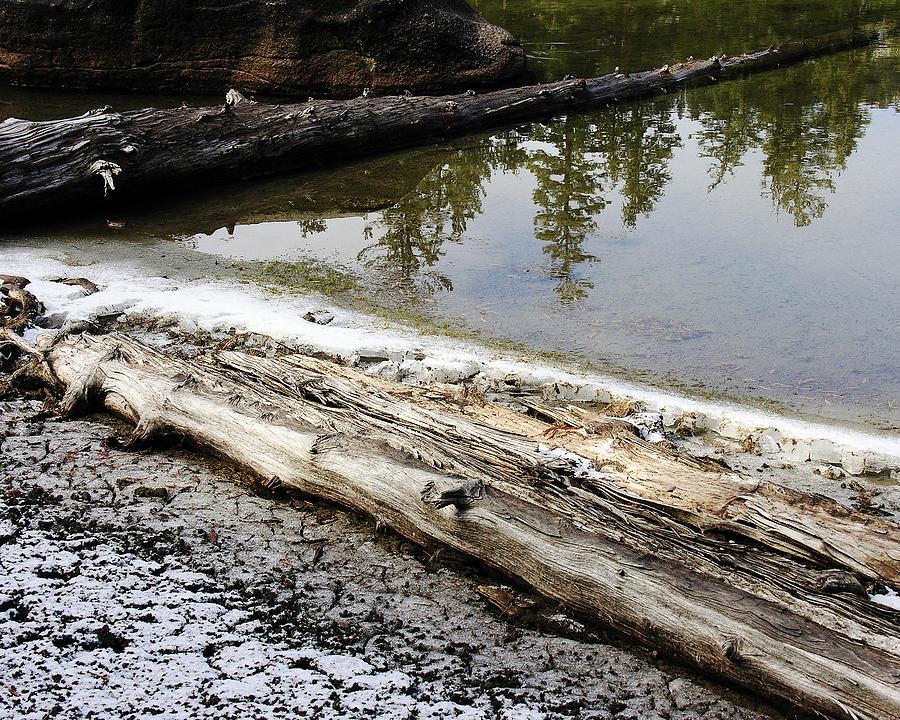 Water Photograph - Vernal Pond Xi by D Kadah Tanaka