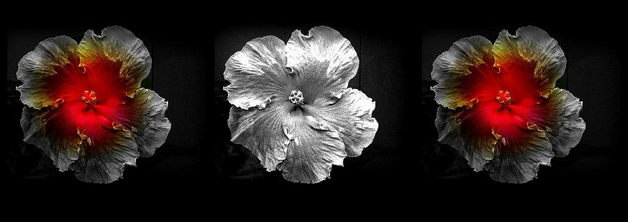 Black And White Flowers Photograph - Vibrant Flower Series 3 by Jen White