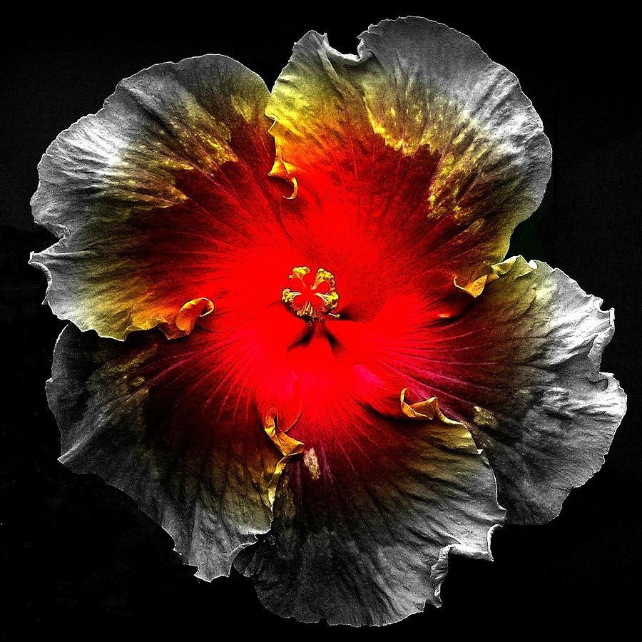 Flower Photograph - Vibrant Flower Series by Jen White
