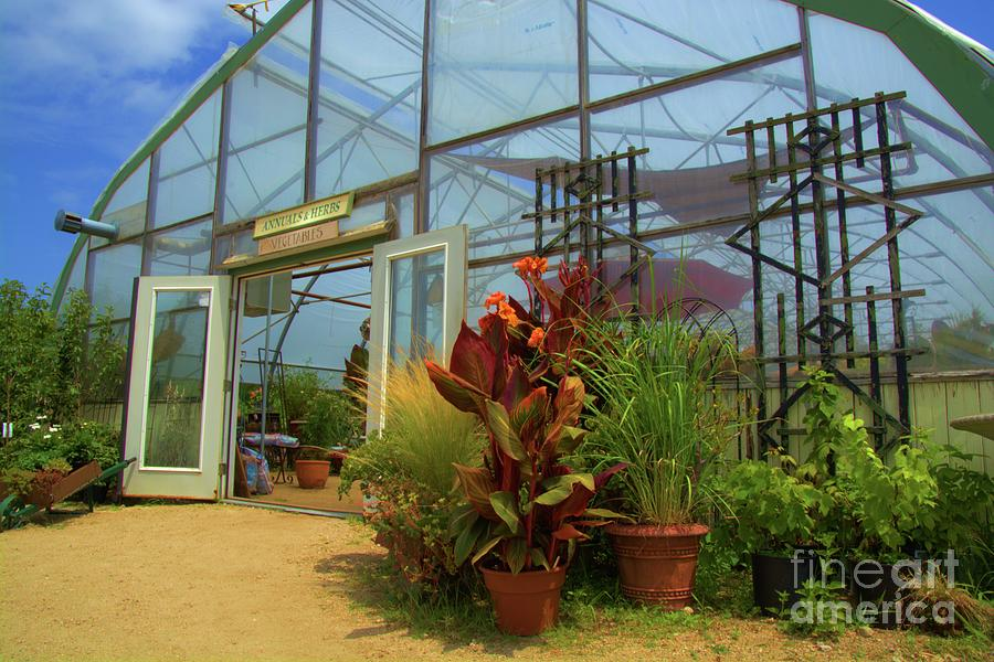 Vibrant Greenhouse by Tammie Miller