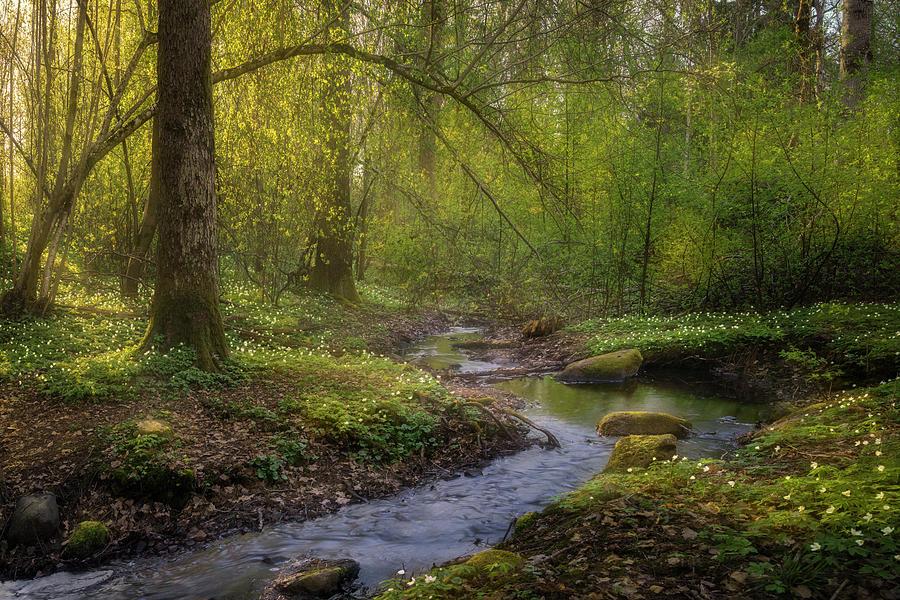 Anemone Photograph - Vid baecken by Ludwig Riml