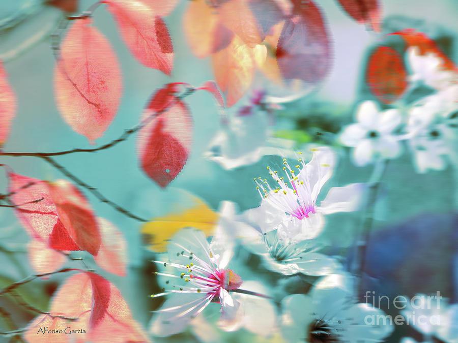 Decor Photograph - Viento De Primavera by Alfonso Garcia