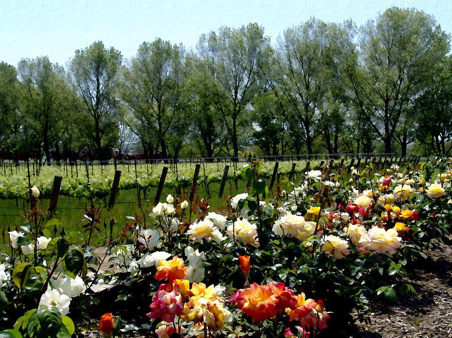 Vineyards Photograph - View From Bridlewood Vineyards by Kurt Van Wagner