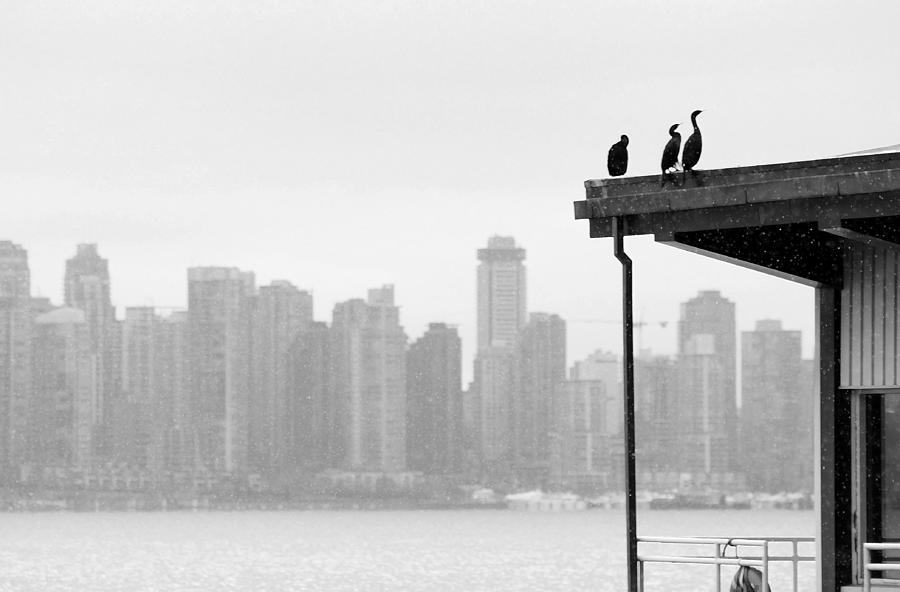 Bird Photograph - View From Londsdale Quay by Barbara  White