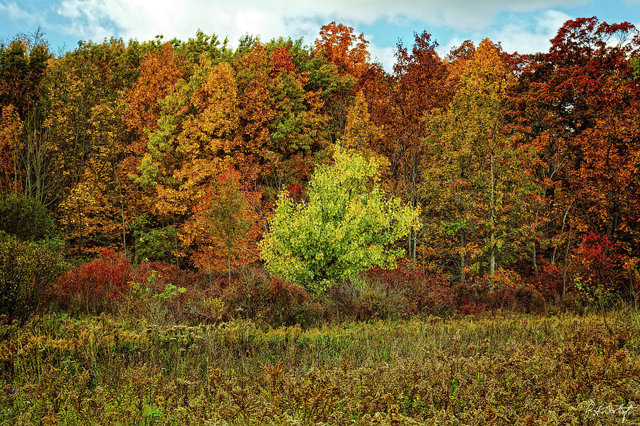 Autumn Photograph - View From The Meadow by Phill Doherty