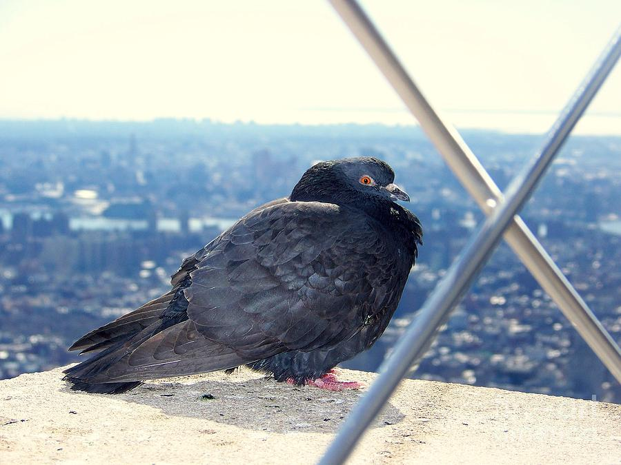 Pigeon Photograph - View From The Top by Peyton Imes