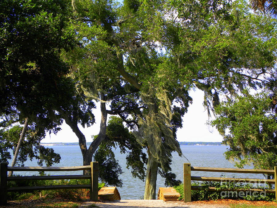 Tampa Photograph - View Of Old Tampa Bay by Terri Mills