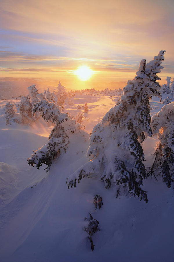 Color Image Photograph - View Of Snow-covered Trees At Mont by Yves Marcoux