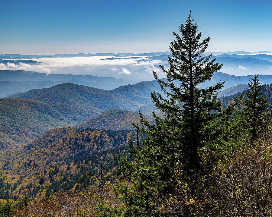 View of the Great Smoky Mountains by Tim Stanley