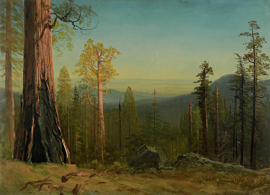 Albert Bierstadt Painting - View Through The Trees by Albert Bierstadt