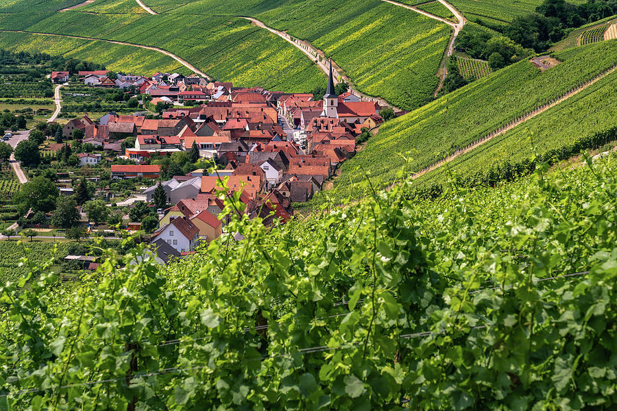 Germany Photograph - Village in the Vineyard by Framing Places