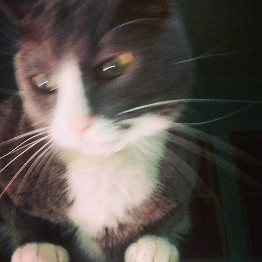 Capture Photograph - Vincent And His Magnificent Whiskers by Genevieve Esson